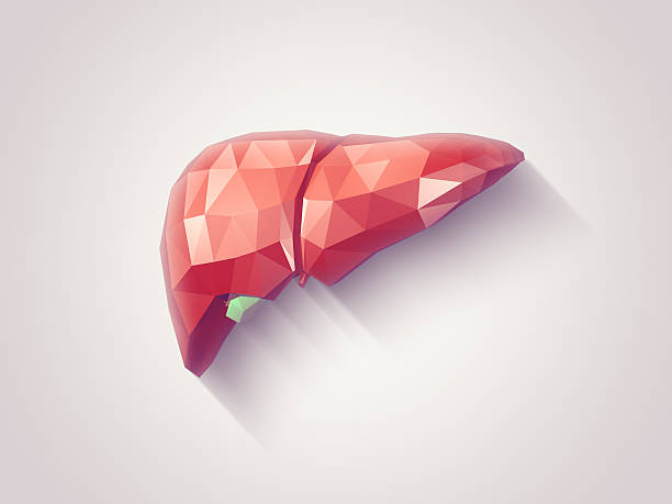 zdrava jetra i silimarin